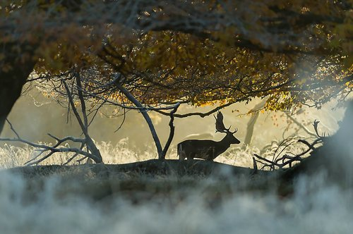 Photographe - Mickaël BONNAMI Photographe - photo 4
