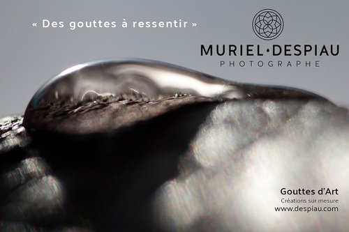 Photographe - Muriel Despiau - photo 3