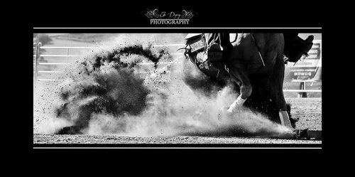 Photographe - Elsa Dupuy Photography - photo 16