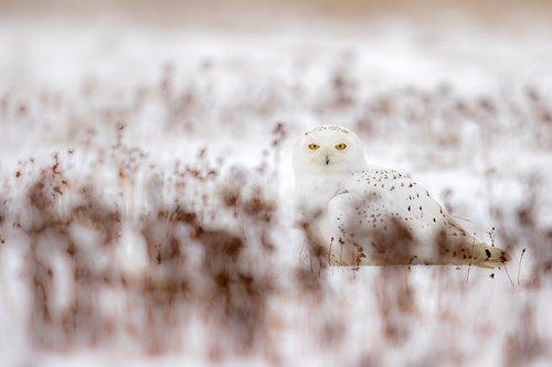 Photographe - Emmanuel Tardy - photo 1