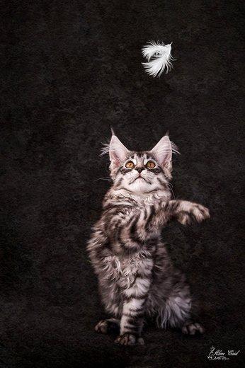 Photographe - Aline Caid photos - photo 1